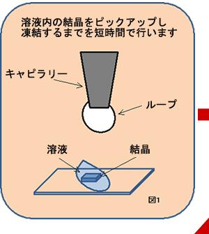溶液内の結晶をピックアップし凍結するまでを短時間で行います